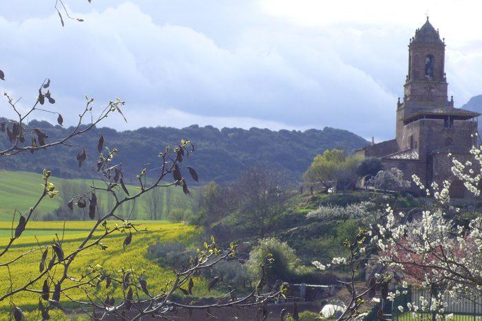 Casa rural La Rinconada en Azuelo Navarra Árbol paisaje